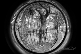 The Faraway Tree