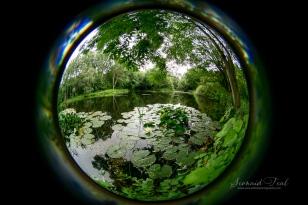 Through a fisheye